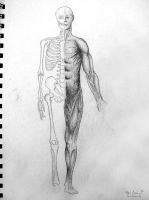 skeleton and muscle sketch by leavinghope