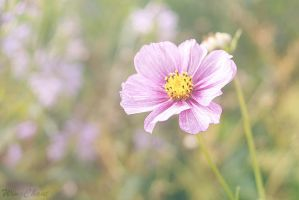 Delicately Pink by WingChant
