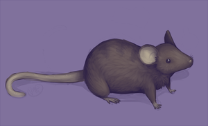 painted mouse by Vullo
