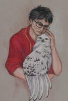 Hedwig in Harm's Way by NicoPony