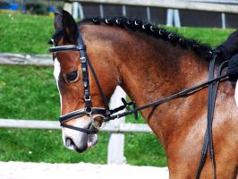 Competition dressage 4 by Driif