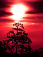 Red Sky and Tree by Sharondipity