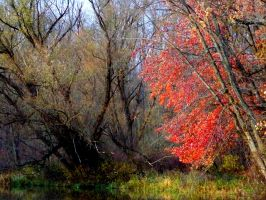 Shades of Autumn 3 by MadGardens