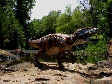Carcharodontosaurus By CollectA. by Carnosaur