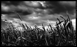 The wind bw by mjagiellicz