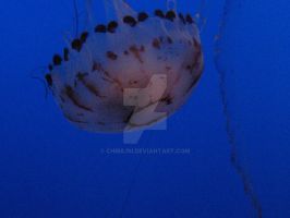 Monterey Bay Aquarium Jelly by ChibiLisi