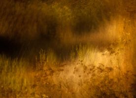 Grasses Are Like Spun Gold by Markus43