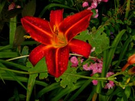 Red flower by PhotographicJaydiee