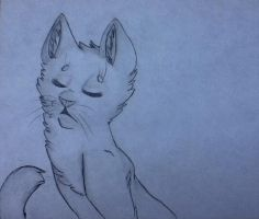 Cinderpelt Sketch by Infected-Shadows
