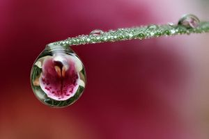 Orchid Dewdrop No. 2 by oneofakindo