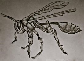 Wasp by brodderick