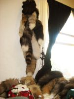 New tail-hanging place! by SPWilder