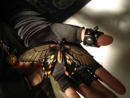 Butterfly In Your Hand by lizzy1e