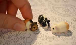 Guinea Pig Set by insanable