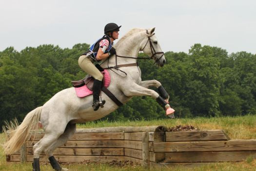 Eventing horse stock by OTRS