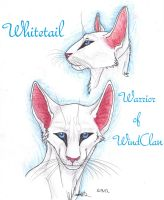 Whitetail Faces by MudstarMord-Sith