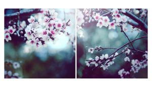 Blossoms by EmiNguyen