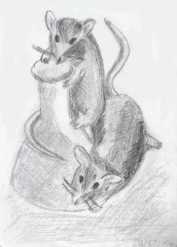 Lab mice by MoUsY-spell-checker