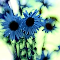 Blue flowers by bwoman2008