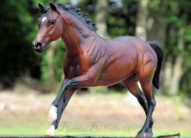 The Undefeated Barbaro by BamaBelle2012