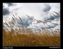 Golden Fields by Reditelj