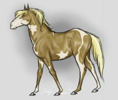 Youtube Palomino Paint by Follyfoot