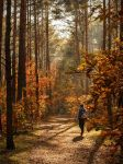 In Autumn Forest by Tullusion