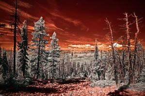 I Think These Trees Look Angry by swiftmoonphoto