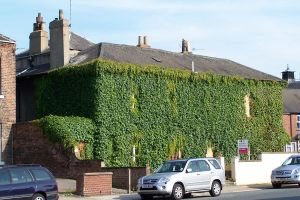 Ivy covered house by Brianetta