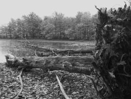 Fallen Tree by AppleBlossomGirl