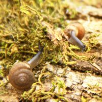 Snails by TheMarchStudios