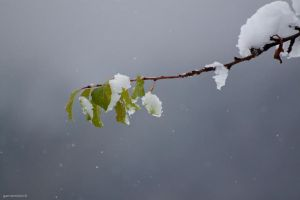 Snow come early on the apple by gollum182