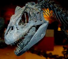 Allosaurus skull by Rhabwar-Troll-stock