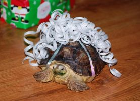 Christmas Tortoise III by CrazyRabidPony