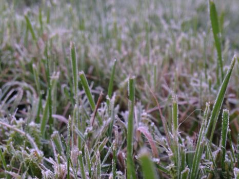 A touch of frost  by Thomaskellerman