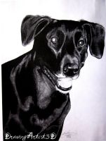 Dog Portrait 3 by DrawingArtist3D