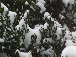 snow on leaves 1 by CodedNotion