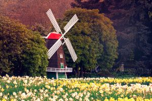 Tulip Festival by FlabnBone