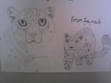 Snow Leopards by SquirrelJoeArmstrong