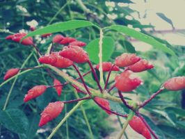 Red, after rain by pooribu