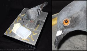 Taxidermy - City Pigeon by Illahie