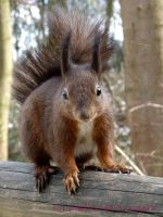 Squirrel 38 by Cundrie-la-Surziere