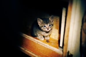 Stray Kitten by jbugbee