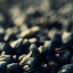 .:Mussels:. by DanCrystalis