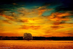 Sunset over the field 2 by orlibraorli