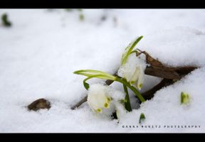 winter after spring by annamnt