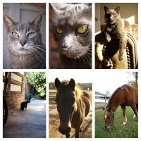 The family cats and horses by ohmyhii