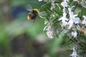 Blurry Bee by syrus