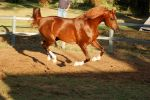RA  Gallop side on all legs up by Chunga-Stock