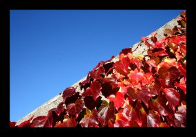 red ivy by melxxx